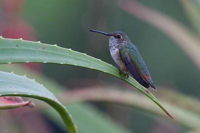 Birds_USA