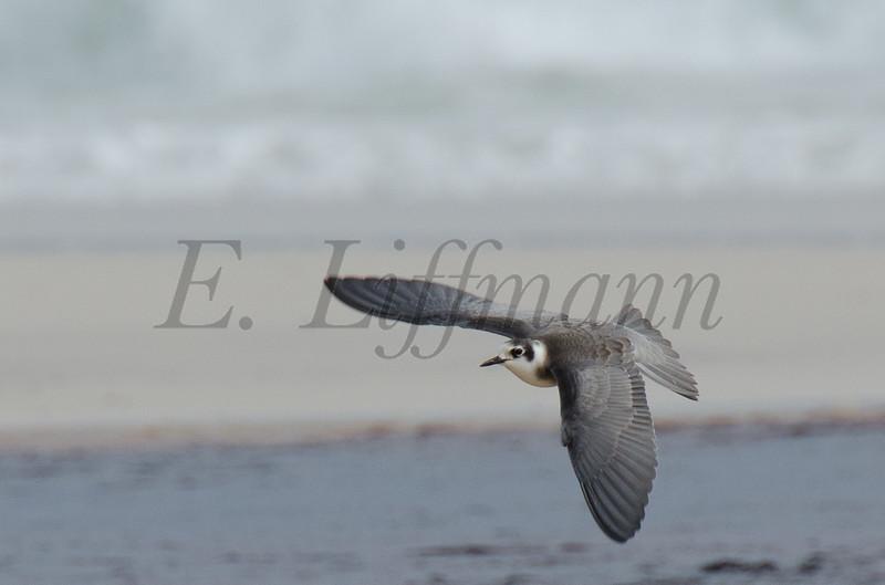 http://ericliffmann.smugmug.com/Other/Birds-in-Flight/i-34nPsZX/0/L/DSC7784-L.jpg