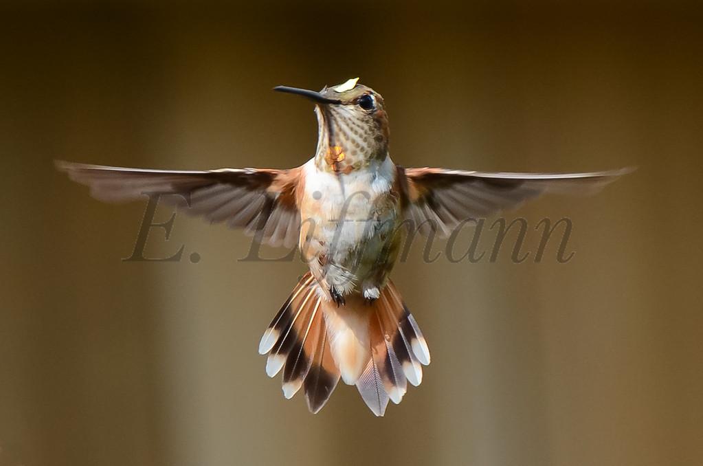 http://ericliffmann.smugmug.com/Other/Birds-in-Flight/i-F2SXHQz/0/XL/DSC5234-XL.jpg