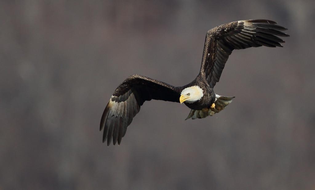 IMAGE: https://photos.smugmug.com/Other/Birds-of-Prey-1/i-567MCH7/0/56aea263/XL/570-XL.jpg