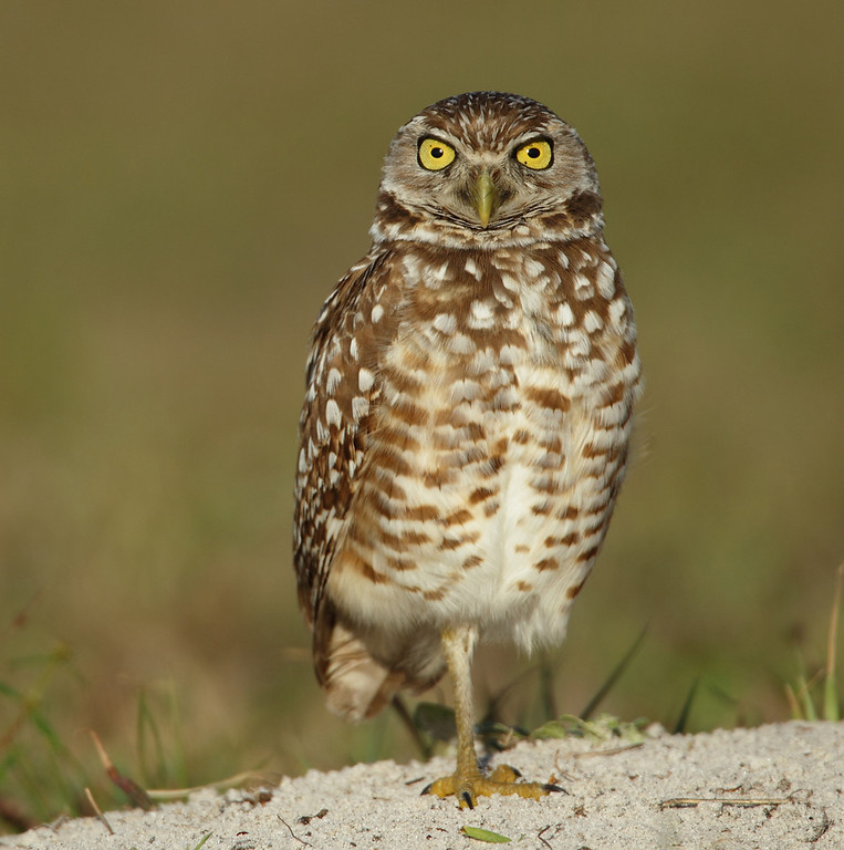 IMAGE: http://www.mikeswildlife.com/Other/Birds-of-Prey-1/i-86ZDvNQ/0/XL/840-XL.jpg
