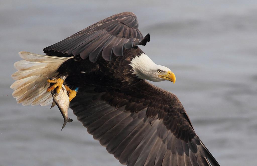 IMAGE: https://photos.smugmug.com/Other/Birds-of-Prey-1/i-GXx8gLJ/1/XL/548-XL.jpg
