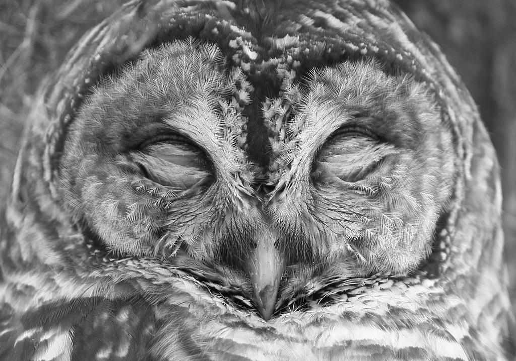 IMAGE: https://photos.smugmug.com/Other/Birds-of-Prey-1/i-GZW78Zf/0/3c9358e9/XL/802-2-XL.jpg