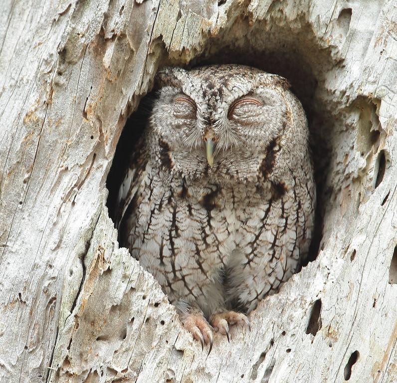 IMAGE: https://photos.smugmug.com/Other/Birds-of-Prey-1/i-LbfhTcc/0/XL/BB8I9362-XL.jpg