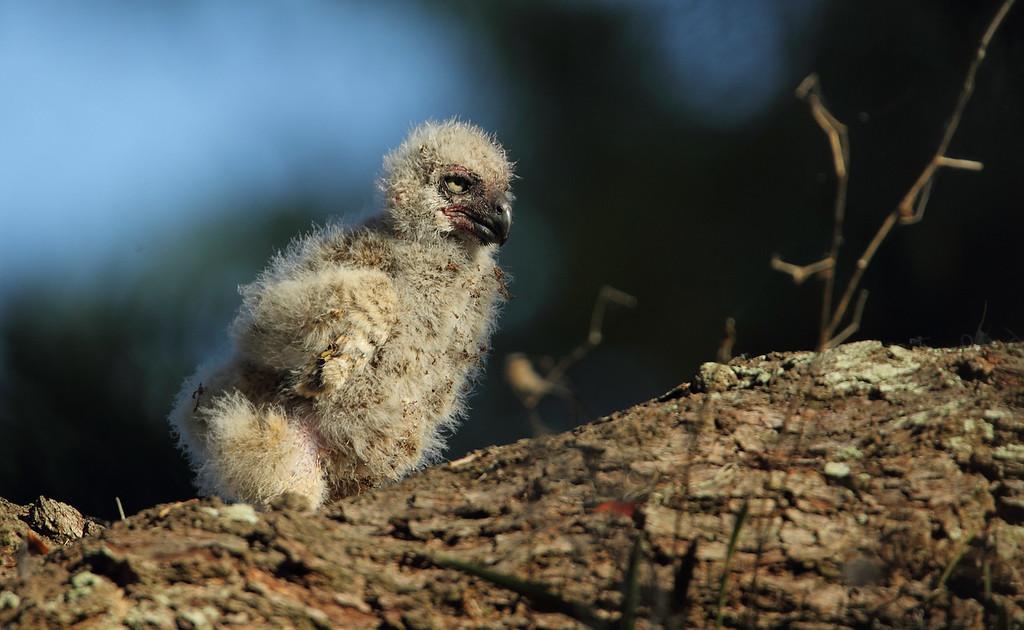 IMAGE: http://www.mikeswildlife.com/Other/Birds-of-Prey-1/i-VQw3Gkf/0/XL/1193-XL.jpg
