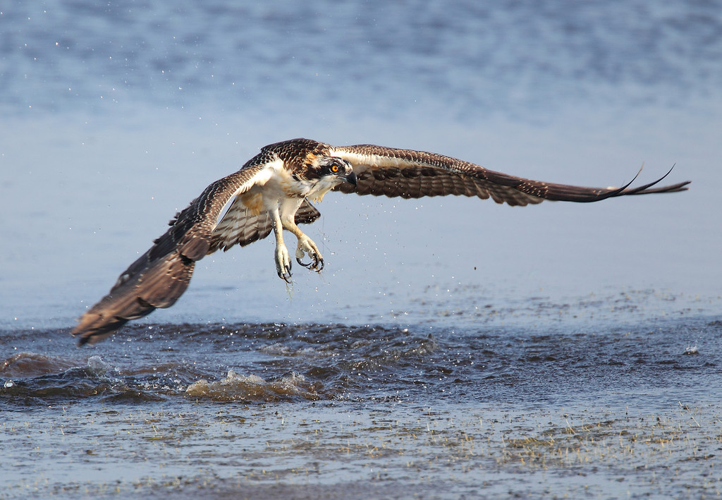 IMAGE: http://www.mikeswildlife.com/Animals/Birds-of-Prey-1/i-VRfT84r/0/XL/363-XL.jpg