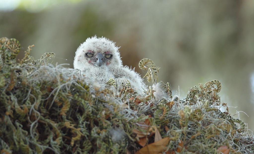 IMAGE: https://photos.smugmug.com/Other/Birds-of-Prey-1/i-Z2tbbnR/0/992610c6/XL/1205-4-XL.jpg