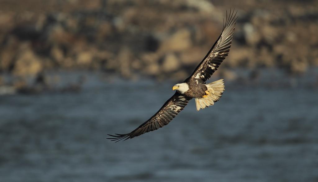 IMAGE: http://www.mikeswildlife.com/Other/Birds-of-Prey-1/i-bDtw4nQ/0/XL/106-3-XL.jpg