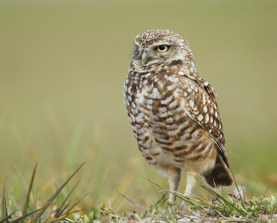 IMAGE: https://photos.smugmug.com/Other/Birds-of-Prey-1/i-tbfrHNf/0/c8a83201/XL/BB8I0890-XL.jpg