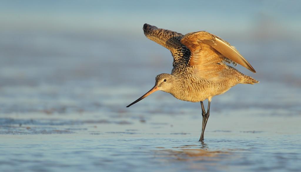 IMAGE: https://photos.smugmug.com/Other/Birds-of-Prey-1/i-wNfksbW/0/98510da7/XL/525-XL.jpg