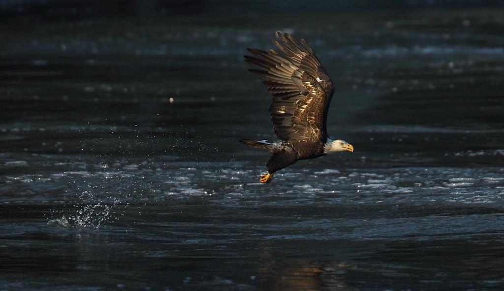 IMAGE: http://www.mikeswildlife.com/Other/Birds-of-Prey-1/i-xLt6nsC/0/XL/194-XL.jpg