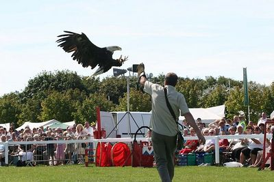 Birds of Prey at Southport Flower Show 2005