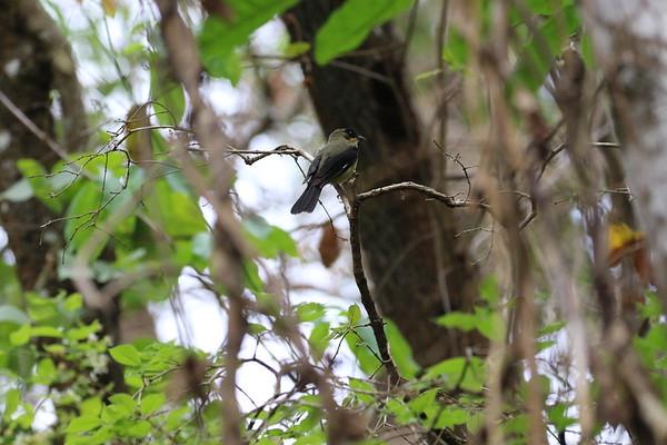Birds of the Pantanal and Brasilia National Park