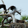 Florida Fort Desota 2011-3873