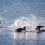 Synchronized Dive