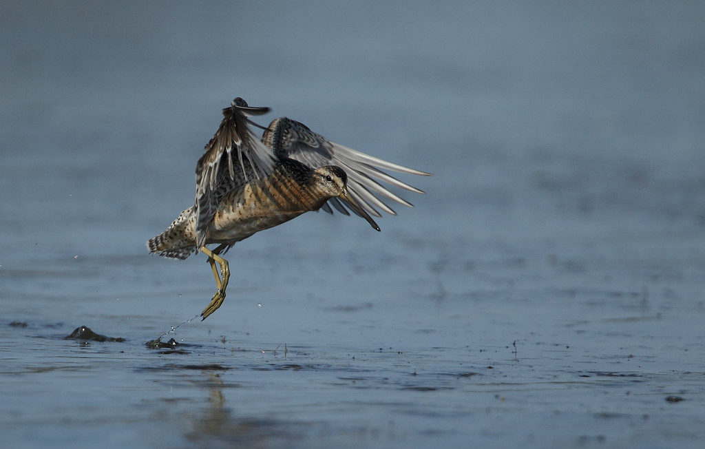 IMAGE: http://www.mikeswildlife.com/Other/Birds/i-76sDJRM/0/XL/122-XL.jpg