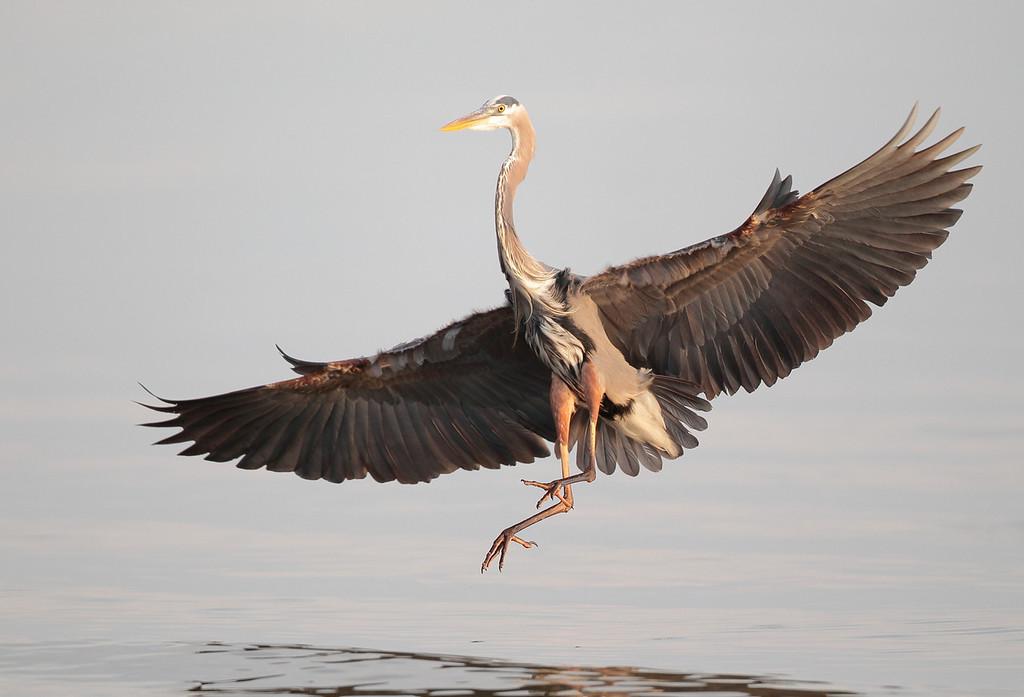IMAGE: http://www.mikeswildlife.com/Other/Birds/i-7ZZ6Rhz/0/XL/346-XL.jpg