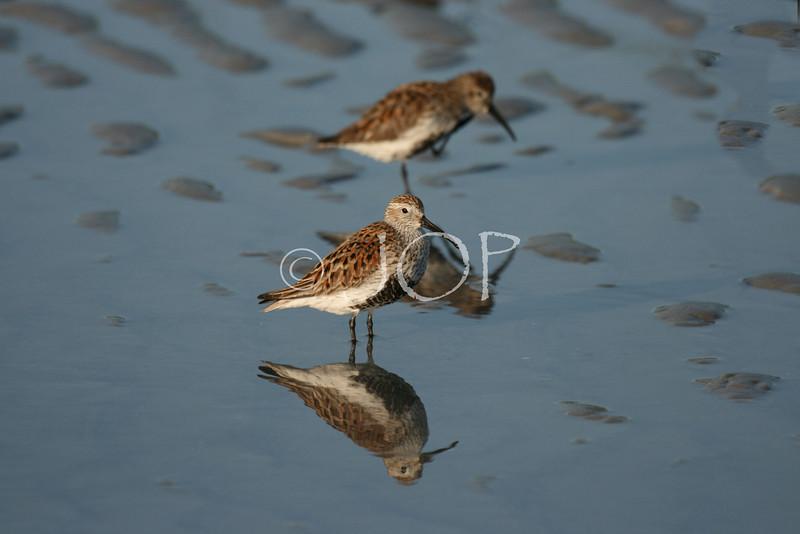 Bird Pics 185 - Copy