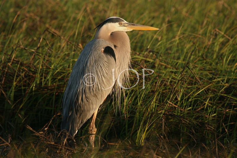 Bird Pics 069