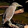 Bird Refuge, Santa Barbara