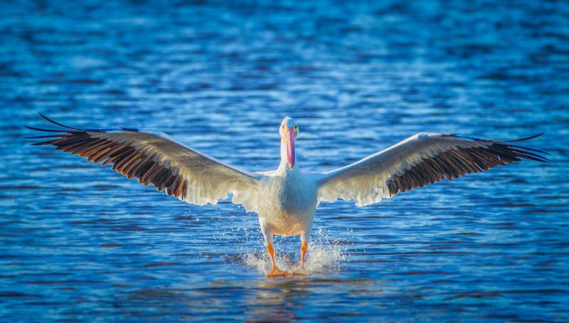 White Pelican Landing