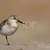 Bird Pics 129