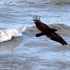 In the Buzzard's Wake by Lora Mosier<br /> <br /> The buzzards will be returning to Hinckley, Ohio on March 15th.  I don't know how they know, but every year on March 15th they come back.  Wonder if they have the whole daylight savings time figured out too...<br /> They'll be happy to be back at the lake, too with all the fish along the shore that didn't make it through the winter.