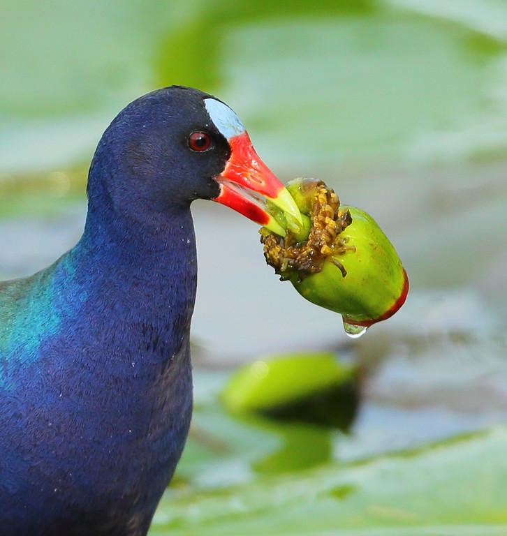 IMAGE: https://photos.smugmug.com/Other/Birds/i-Q7jmmTP/0/XL/BB8I9831-XL.jpg