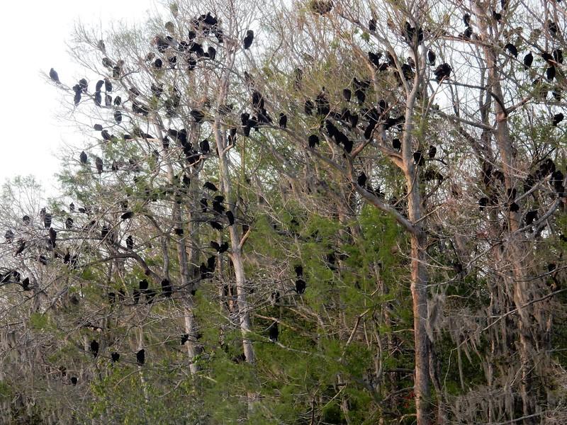 Manatee Springs State Park, near Chiefland, Florida