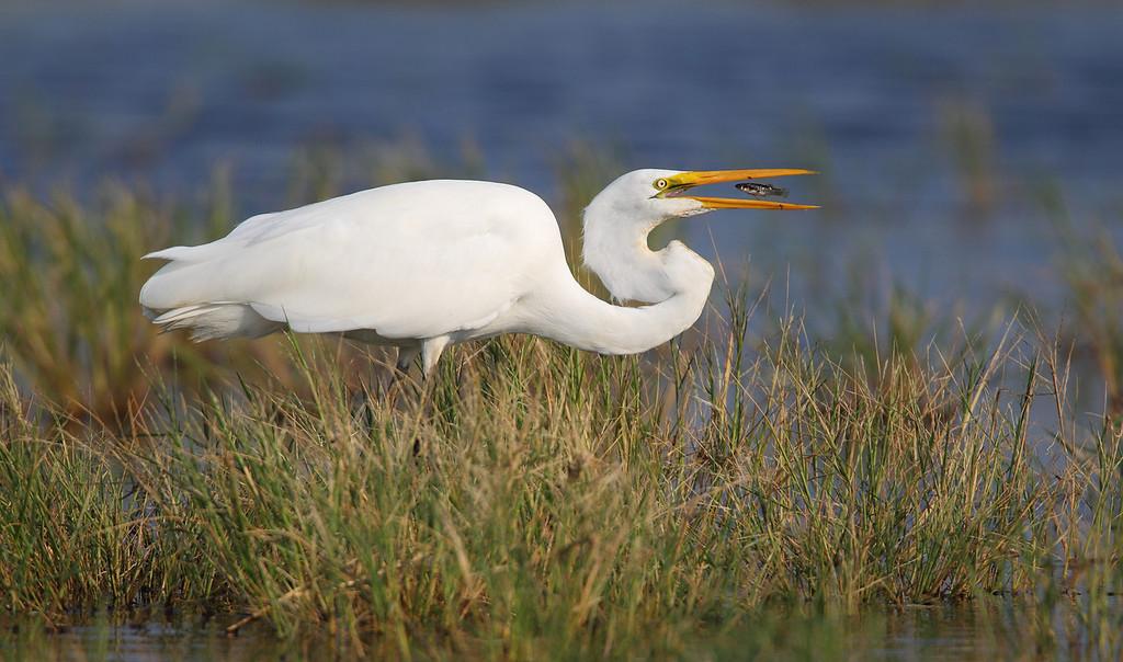 IMAGE: https://photos.smugmug.com/Other/Birds/i-QWT3RFJ/0/deb444a9/XL/108-XL.jpg