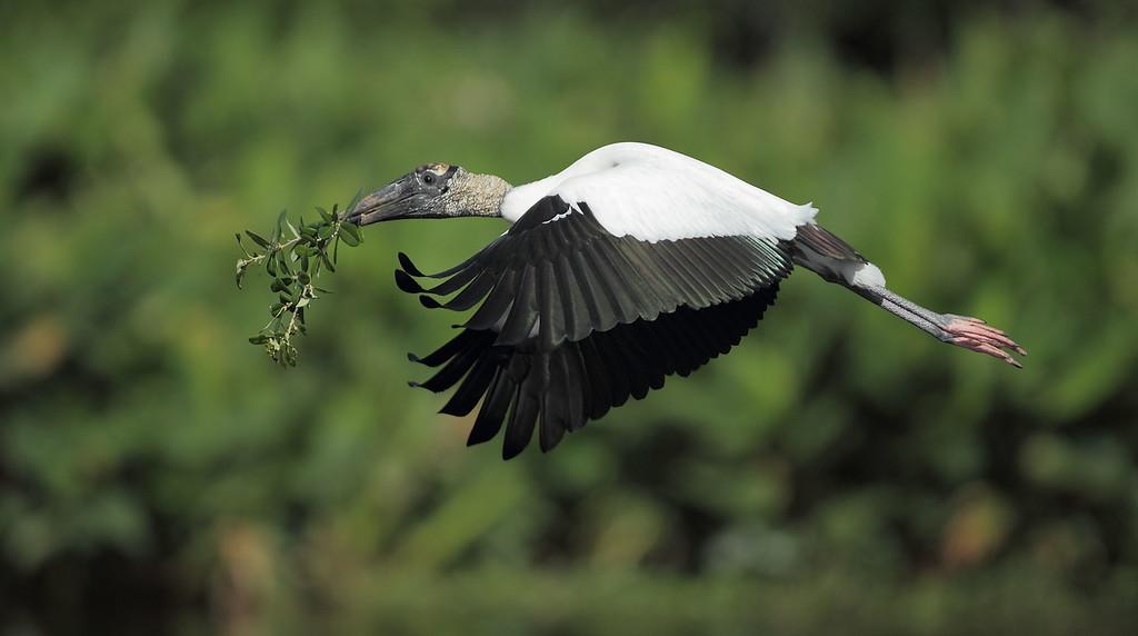 IMAGE: https://photos.smugmug.com/Other/Birds/i-Qb37FVG/0/6bb18f10/XL/1060-XL.jpg