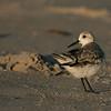 Birds #7
