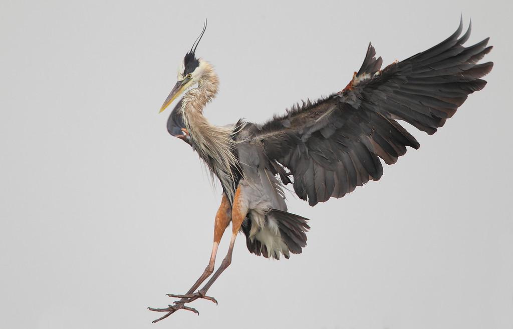 IMAGE: https://photos.smugmug.com/Other/Birds/i-RbvBsWM/0/5634a200/XL/651-2-XL.jpg