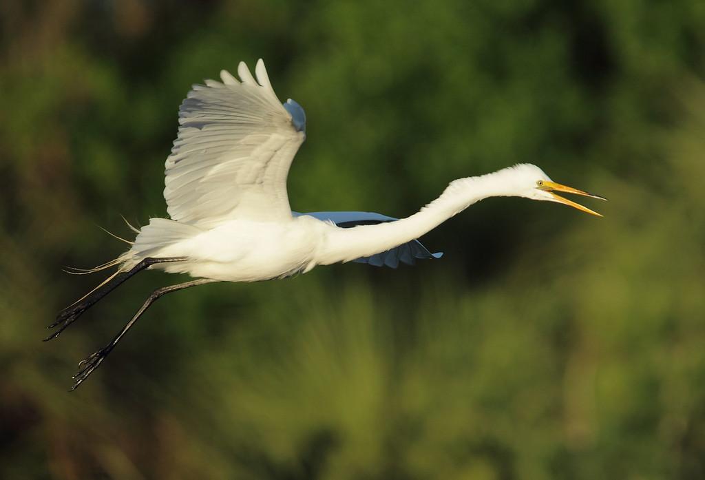 IMAGE: http://www.mikeswildlife.com/Other/Birds/i-RsQfZRp/0/XL/295-XL.jpg