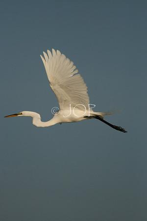 Pictures Of Wildlife 057