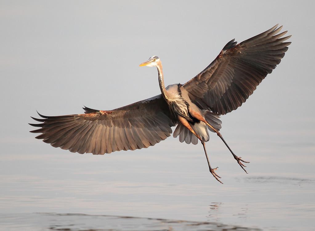 IMAGE: http://www.mikeswildlife.com/Other/Birds/i-SX7PHrX/0/XL/343-XL.jpg