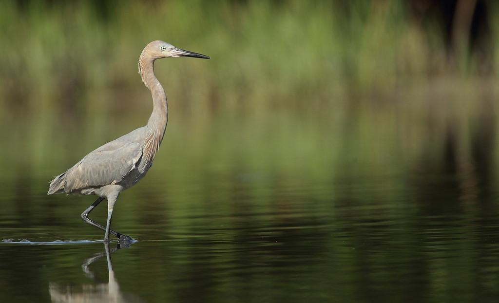IMAGE: http://www.mikeswildlife.com/Other/Birds/i-SbhZCVx/0/XL/919-XL.jpg