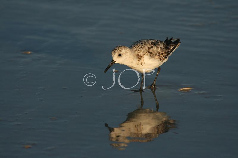 Surfing + Bird Pictures 298