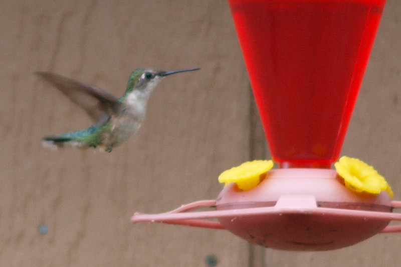 """Hummer by M.T. Bass<br /> <br />  <a href=""""http://www.burningriverboutique.com"""">http://www.burningriverboutique.com</a>"""