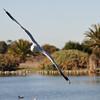 Banking Left<br /> Palo Alto Bird Pond, CA