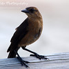 "Boardwalk Bird by Lora Mosier<br /> <br /> This little guy was guarding the boardwalk on Tybee Island, GA.<br /> <br />  <a href=""http://www.burningriverboutique.com"">http://www.burningriverboutique.com</a>"
