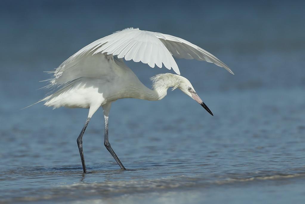 IMAGE: https://photos.smugmug.com/Other/Birds/i-bh4ktTq/0/eddc0a10/XL/BB8I5320-XL.jpg