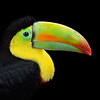 Keel-billed Toucan, Costa Rica, South America.