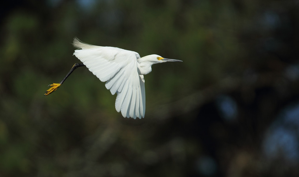 IMAGE: http://www.mikeswildlife.com/Other/Birds/i-cSg4Zmj/0/XL/106-XL.jpg