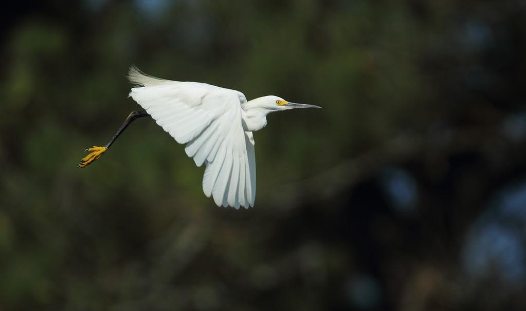 IMAGE: https://photos.smugmug.com/Other/Birds/i-cSg4Zmj/0/b4f940ef/XL/106-XL.jpg