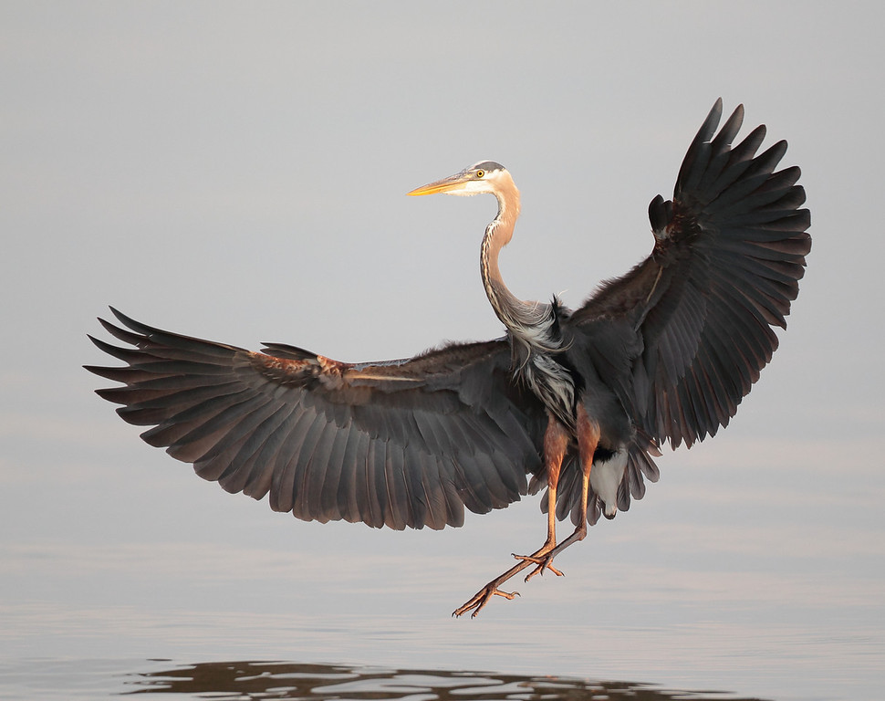 IMAGE: http://www.mikeswildlife.com/Other/Birds/i-hmshLsh/0/XL/347-XL.jpg