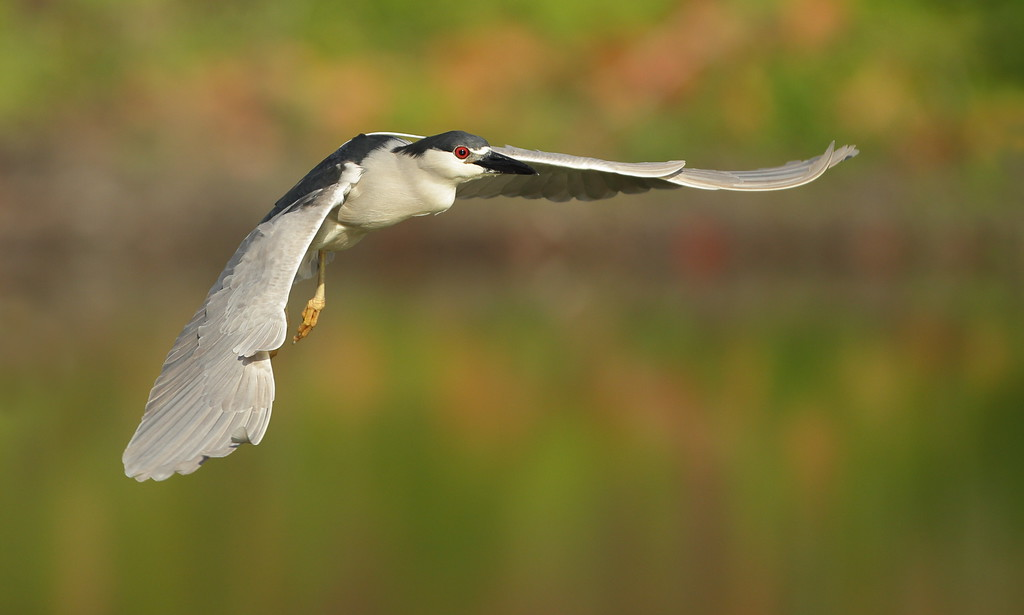 IMAGE: https://photos.smugmug.com/Other/Birds/i-hwNhbqW/0/XL/BB8I9570-XL.jpg