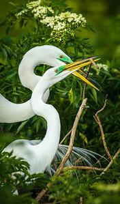 Great Egret stick Pass