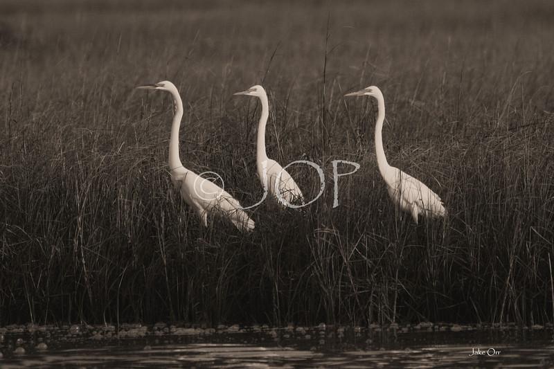 Pictures Of Wildlife 106 jpg sig