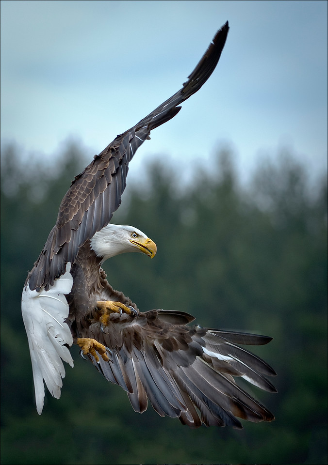 Eagle is Landing....